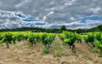 Evan Derrien, viticulteur sur Aspères